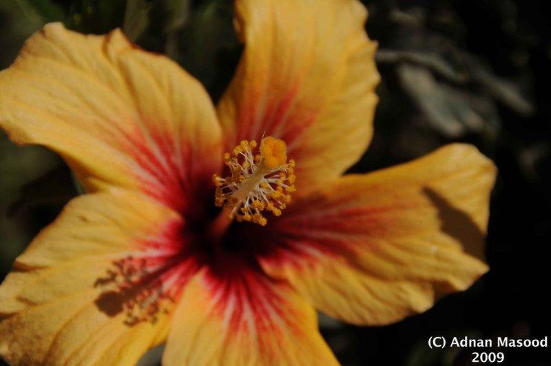 Flower_109.jpg