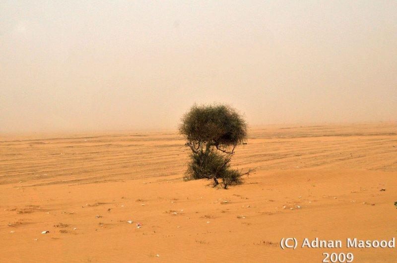 Sandstorm_01.jpg