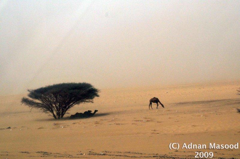 Sandstorm_02.jpg