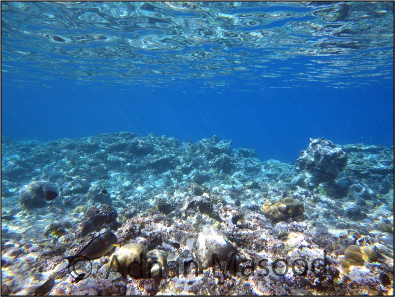 Red_Sea_021.jpg
