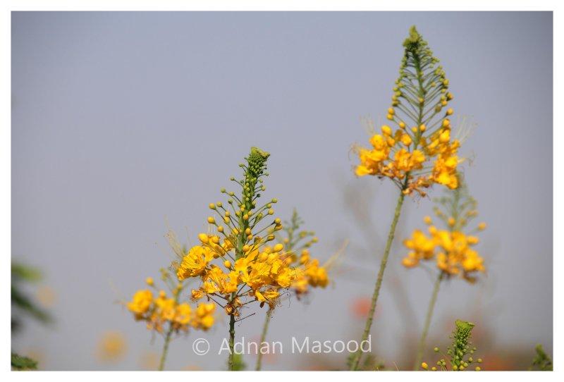 Flower_0511.jpg