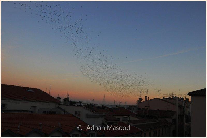 Sunset and Birds.jpg