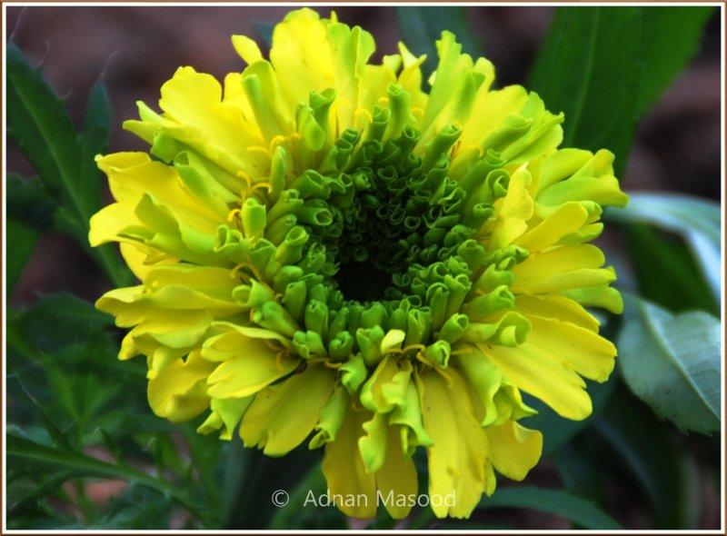 Flower_1201.jpg