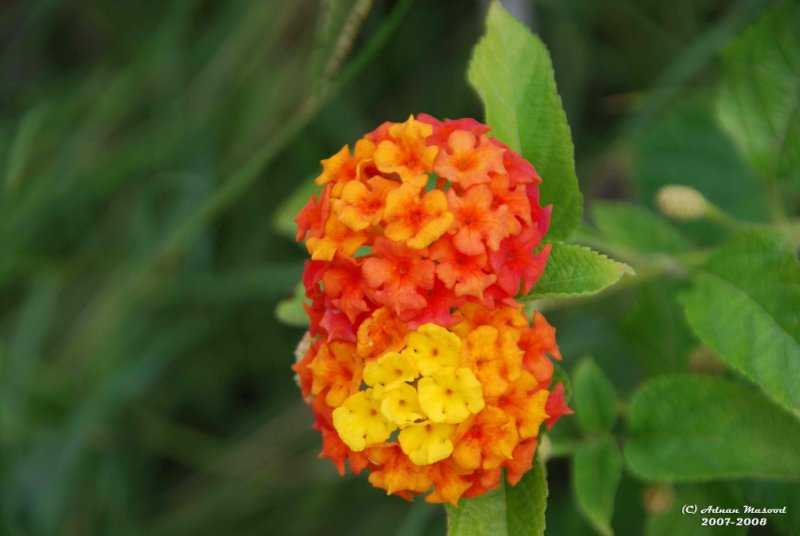 Flower-002.jpg