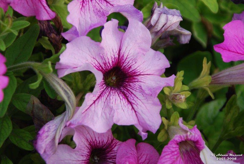 Flower-016.JPG