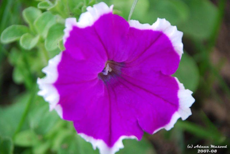 Flower-030.JPG