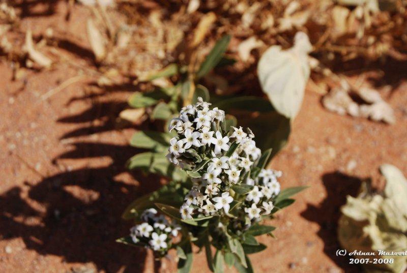 Flower-032.JPG