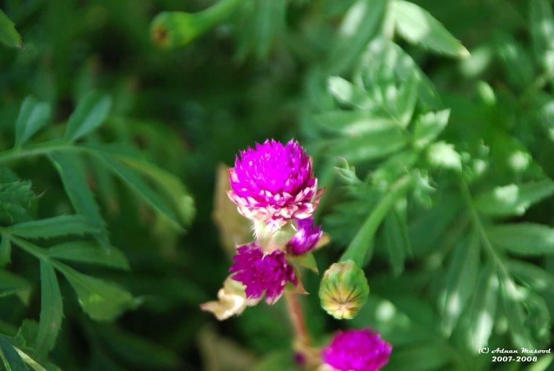 Flower-039.JPG