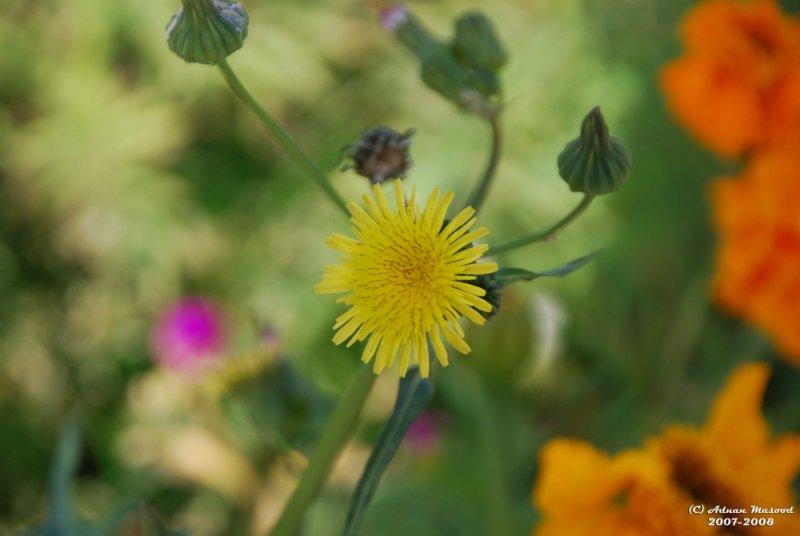 Flower-042.JPG