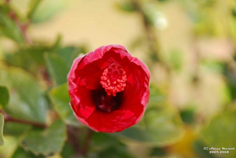 Flower-045.JPG