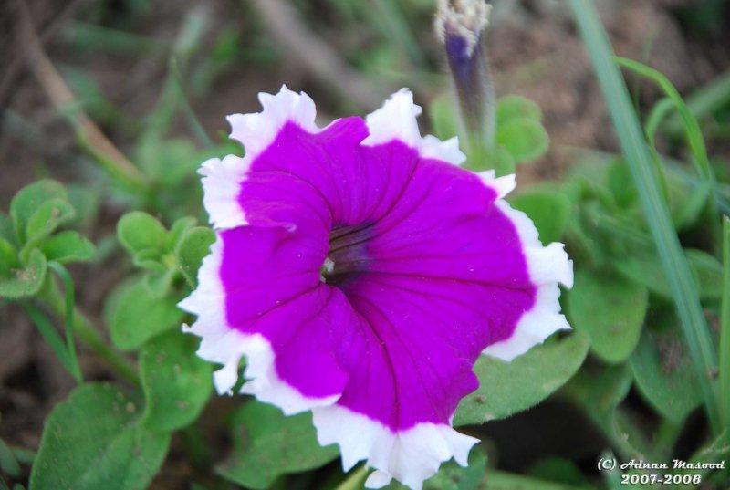 Flower-054.JPG