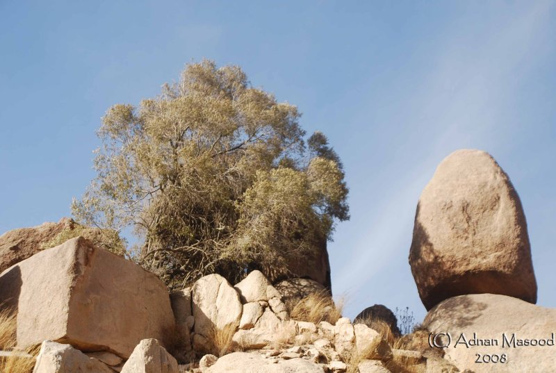 35 - Al-Ghazzal Valley - May 08.jpg