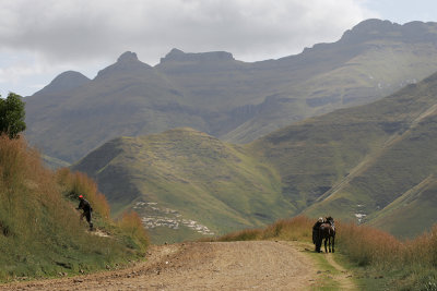 road back to South Africa