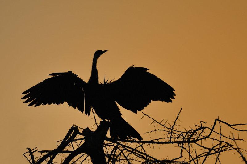 K_oiseau_01.jpg
