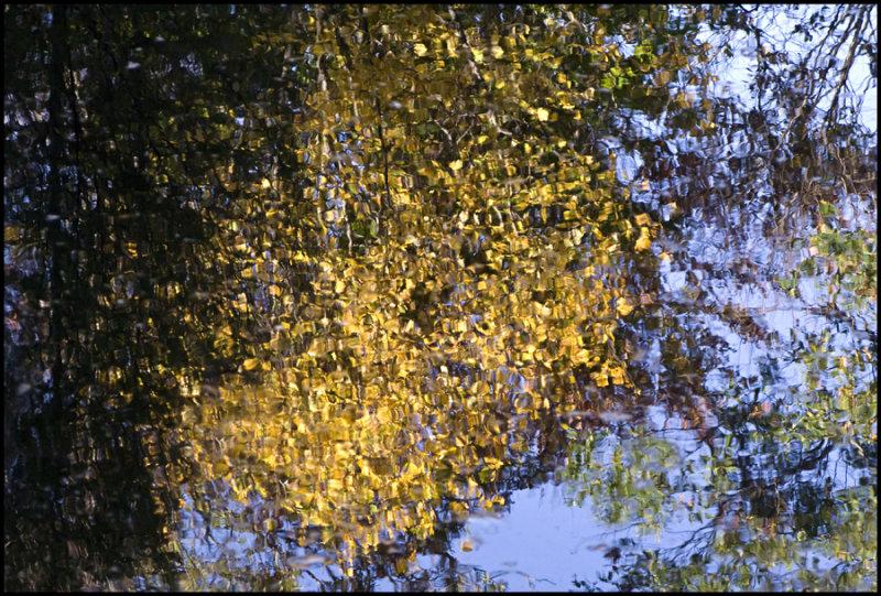 Connecticut Reflection