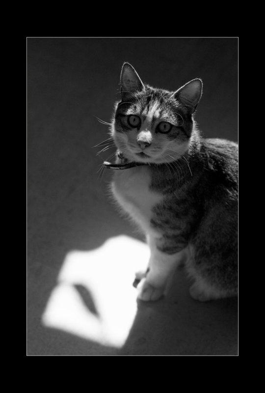 A qui est </br>ce chat ?