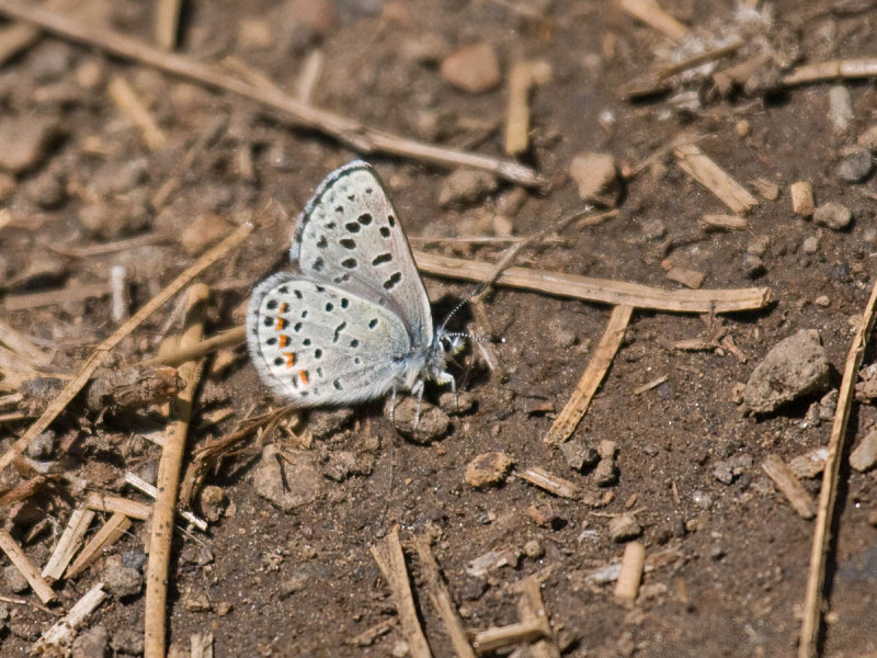 IMG_3571_butterfly_1a.jpg