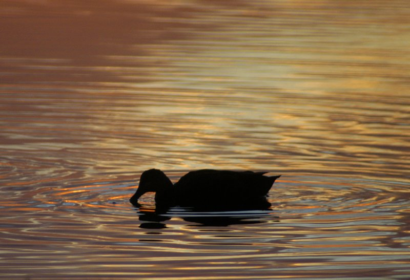 twilight - parker river 371
