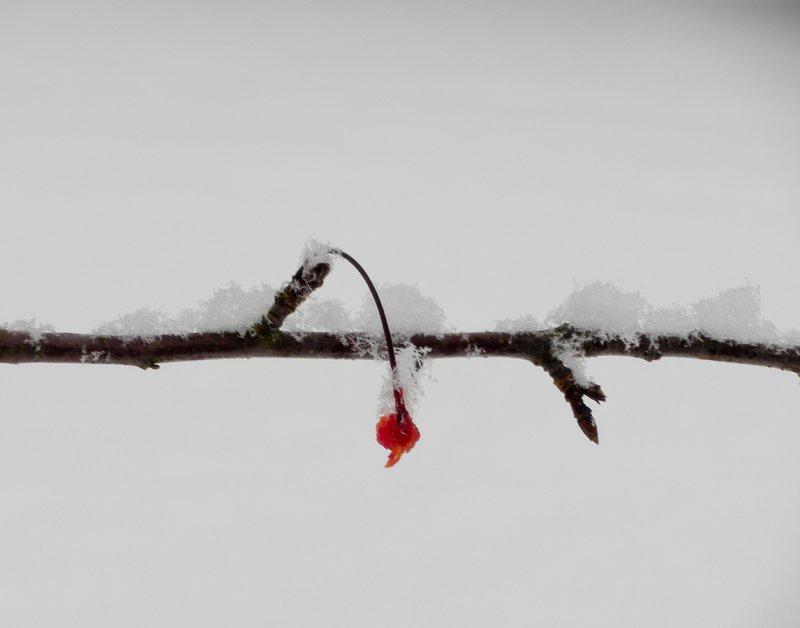 winter fruit 423