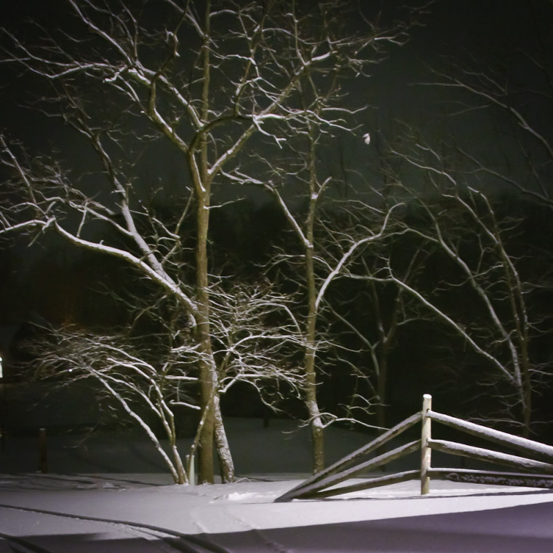 1-11-11 Tree in Snow<br><font size=3> ds20110111-0002.jpg</font>