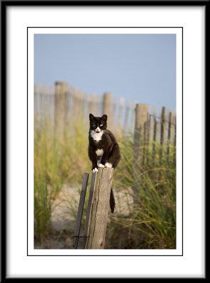 Feral Cat near Boardwalk