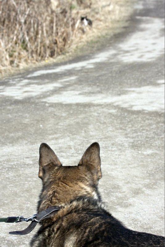Doglife 2.jpg