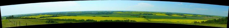 Lavoy canola panorama10.jpg