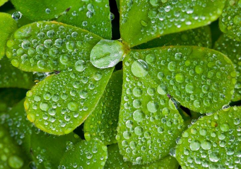 Rain washed leaves