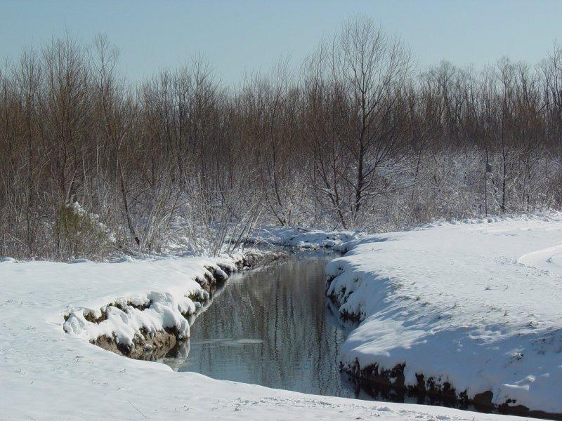 490 Creek near house