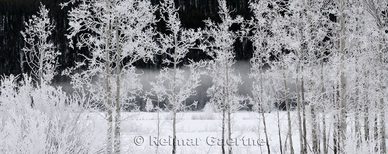 195 Oxbow Bend Frosted Trees 4 P.jpg