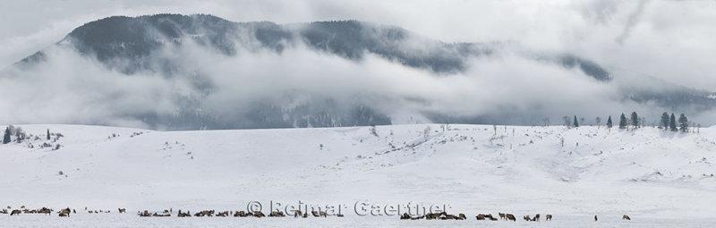 196 National Elk Refuge 1 P.jpg