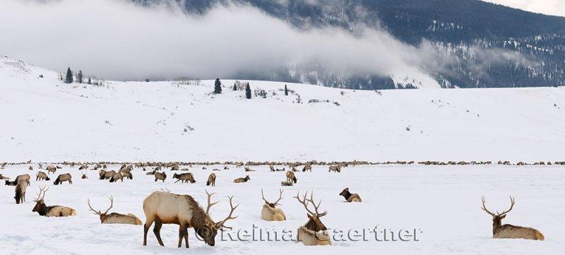 196 National Elk Refuge 4 P.jpg