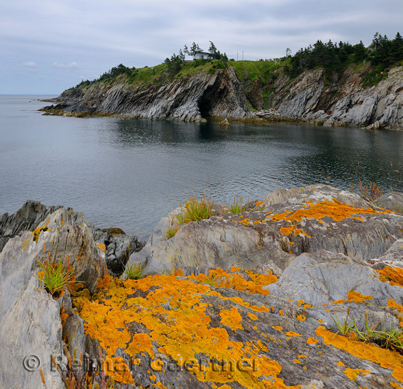 Orange lichen on the sea cliffs of Smugglers Cove Provincial Park Nova Scotia