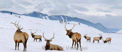 196 National Elk Refuge 6 P.jpg