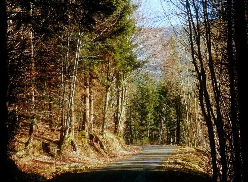 forêt de Vexincourt