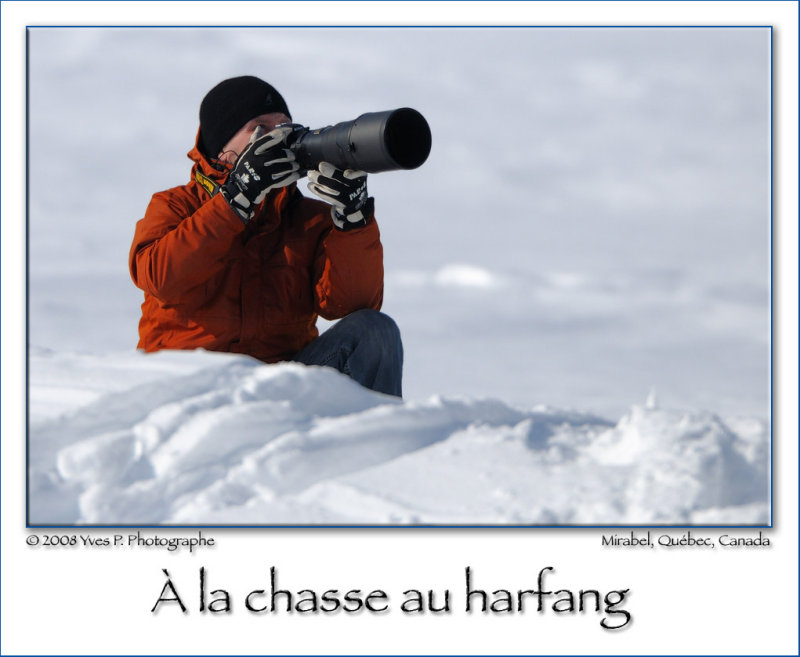 Looking for the Snowy Owl