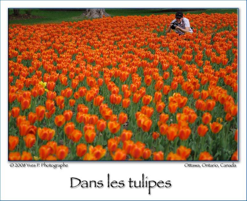 Dans les Tulipes ...