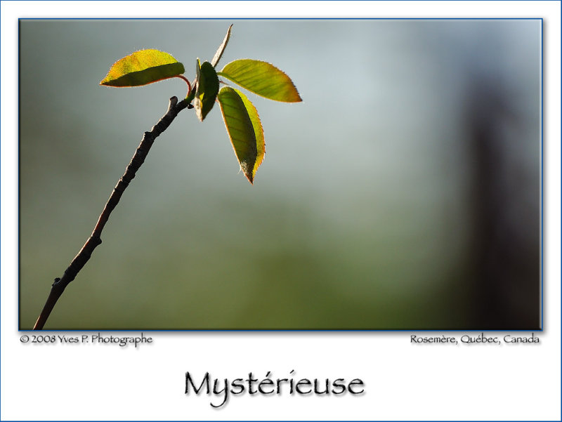 Mysterious ...