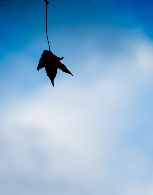 Thinking of a Leaf