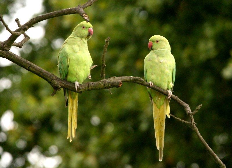 Birds of England ???