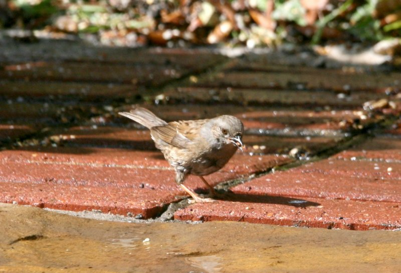 I think this might be a sparrow.