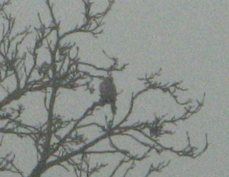 A bird of prey.