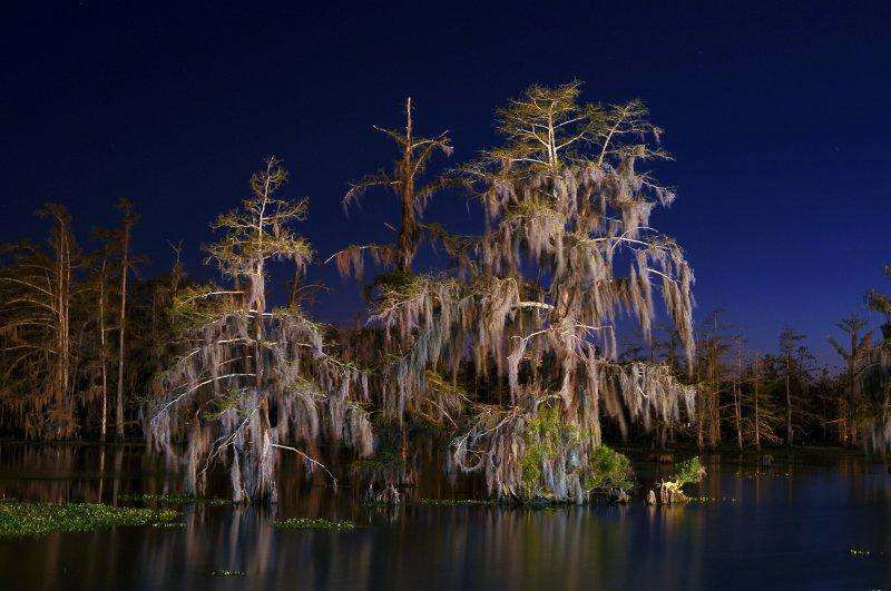Night Cypress