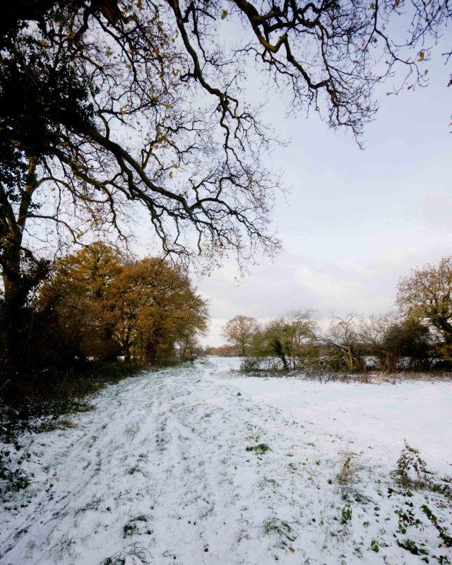 Oak trees 101202 - 002-2.jpg