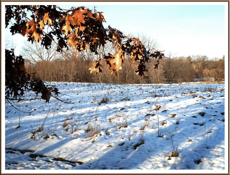 November 23 - Afternoon Shadows