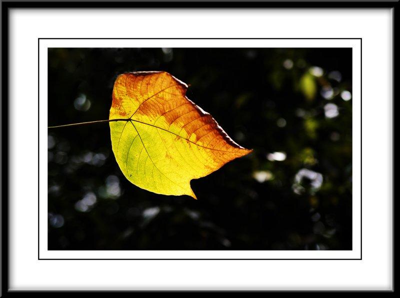 Autumn feel.jpg
