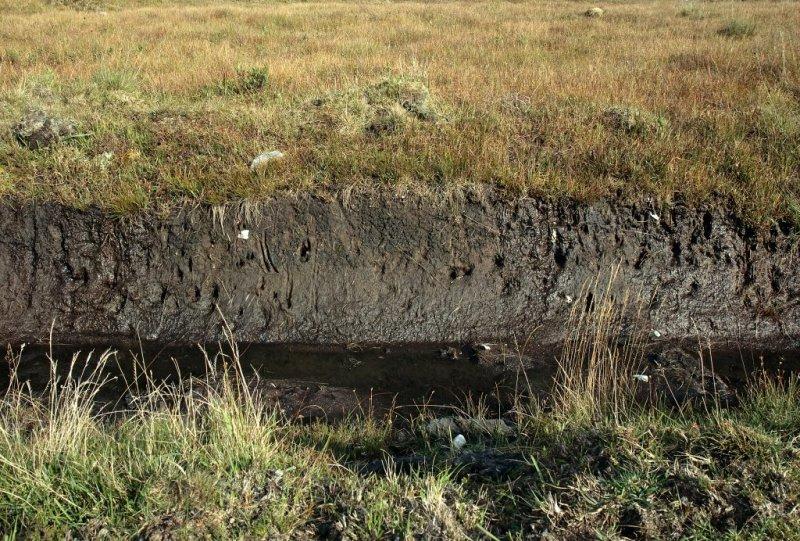 Detail of turf cutting