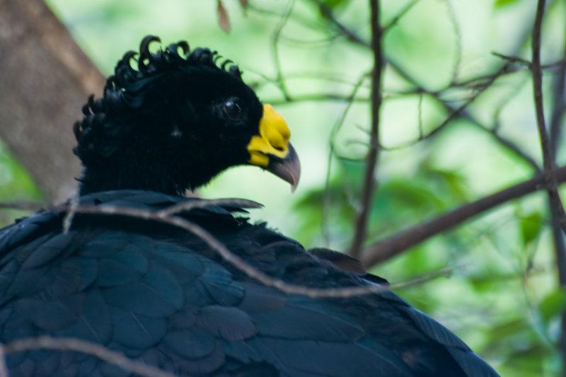 Quest ce que cet oiseau frissé?
