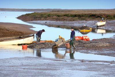 Gathering Mussels
