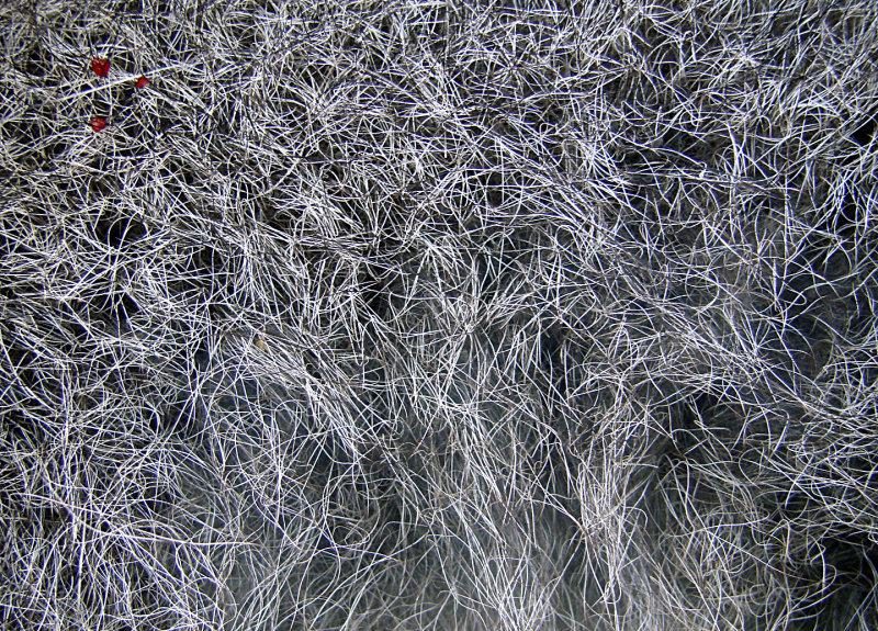 Dead Racoon Fur